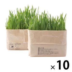 まとめ買いセット 無印良品 猫草栽培セット 2個入り 10セット 良品計画|LOHACO PayPayモール店