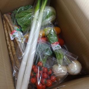 袖ケ浦市 ふるさと納税 台風被害に負けるな!袖ケ浦市産野菜の詰め合わせ