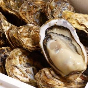 厚岸町 ふるさと納税 厚岸産殻牡蠣 『マルえもん2L-size 14個入り』