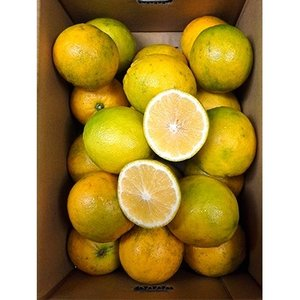宇城市 ふるさと納税 食べるレモン スイートレモネード 2kg|y-sf