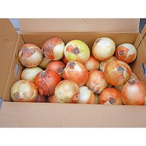 上郡町 ふるさと納税 【令和3年産】大型農家が作る玉ねぎ Lサイズ 約10kg