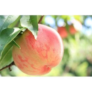 須賀川市 ふるさと納税 阿部農縁 福島県の桃2kg ふくしまの完熟もも|y-sf