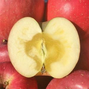 長野市 ふるさと納税 【長野市産りんご】サンふじ 約3kg(8〜12玉)【家庭用】