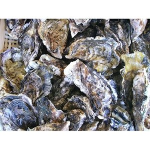 長崎市 ふるさと納税 長崎県産 大村湾殻付き牡蠣セット 3kg