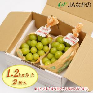 須坂市 ふるさと納税 《数量限定》JAながの シャインマスカット1.2kg以上 2房入り  y-sf