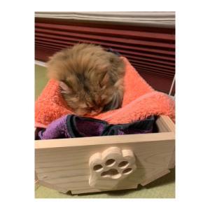 竜王町 ふるさと納税 国産桧材で作ったプランター(猫プランター)と小物入れ y-sf