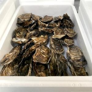 紋別市 ふるさと納税 【予約受付】(2020年10月末〜出荷分)生牡蠣 中サイズ 約2.8kg(30個入)の画像