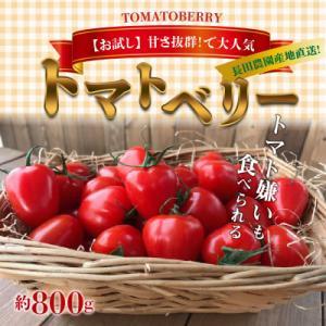 碧南市 ふるさと納税 【お試し】幻のミニトマト トマトベリー 800g H004-026