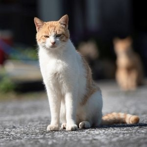 佐伯市 ふるさと納税 深島の猫へ寄付と深島猫グッズ(Aプラン) y-sf