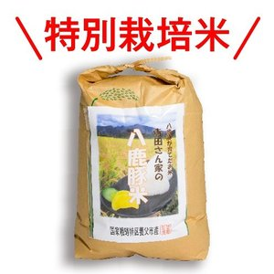 【減農薬・化学肥料不使用】てらださん家の八鹿豚米(ようかぶたまい)10kg 精米 冷めてももっちり甘くておいしい養父市産のお米 父の日 ギフト yabulovewalker