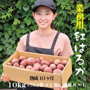 焼き芋 2種食べ比べ シルクスイート 紅はるか 冷蔵 冷やし焼き芋 ひえひえ君  1kg 送料無料 yakiimomarujun