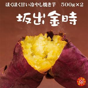 焼き芋 熟成済み「坂出金時」冷蔵 冷やし焼き芋 ひえひえ君 1kg 送料無料 yakiimomarujun