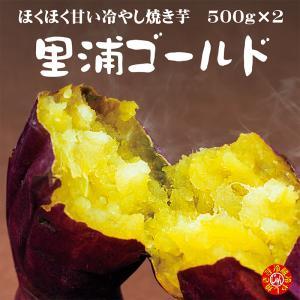 焼き芋  熟成済み 「里浦ゴールド」冷蔵 冷やし焼き芋 ひえひえ君 1.5kg 送料無料 yakiimomarujun