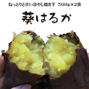焼き芋 熟成済み 葵はるか ねっとり甘い 冷蔵 冷やし焼き芋 ひえひえ君 1.5Kg 送料無料 yakiimomarujun