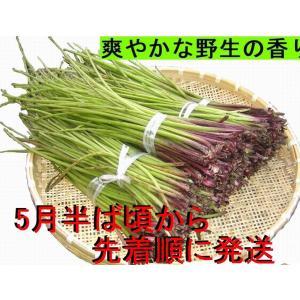 【名水の里黒部】天然 山蕗・ふき・フキ・葉切除・発送中! 1,000g|yakusekien