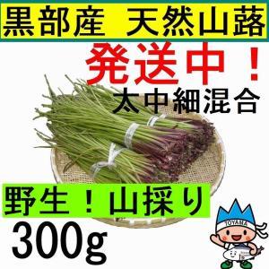 【名水の里黒部】天然 山蕗・ふき・フキ・葉切除・発送中! 300g|yakusekien