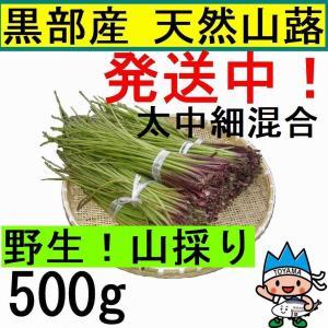 【名水の里黒部】天然 山蕗・ふき・フキ・葉切除・発送中! 500g|yakusekien