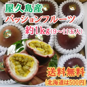 屋久島産 パッションフルーツ 1kg 送料無料 数量限定 予約受付