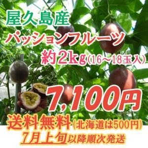屋久島産 パッションフルーツ 2kg 送料無料 数量限定 予約受付