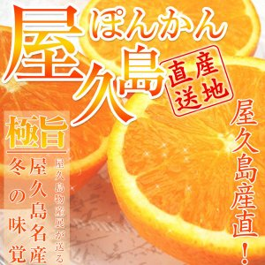 屋久島ぽんかんMサイズ(5Kg)【出荷は12月中旬頃から予約...