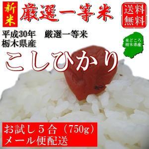 新米 お米 750g(5合) こしひかり 栃木県産 白米 一...
