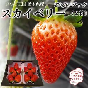 栃木県産スカイベリー 2箱(300g×2パック)×2 【送料無料】【期間限定】 日時指定は出来ません。