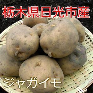 栃木の新鮮野菜 ジャガイモ800g 採れたて栃木の野菜を限定...