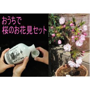 お花見セット(一才桜「旭山」&徳利入日本酒)|yama