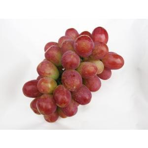 山梨産「サニードルチェ」ぶどう2kg(3房前後)※種なし|yama