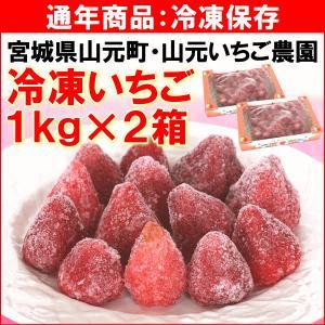いちご 宮城県 山元いちご農園 「冷凍いちご」 1kg(約30個)×2箱 品種ミックス 送料込|yamagata-kikou