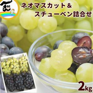 ぶどう 山形県産「ネオマスカット&スチューベン」 計2kg yamagata-kikou