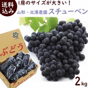 ぶどう 送料無料 山形県・北澤農園  スチューベン  2kg yamagata-kikou