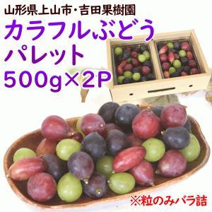 ぶどう 山形県上山市産「カラフルぶどうパレット」 500g×2パック(4種入・品種おまかせ) 送料込 yamagata-kikou