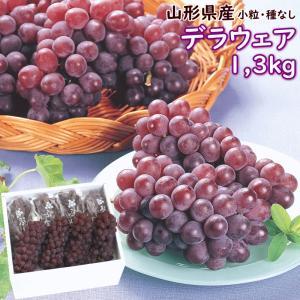 ぶどう デラウェア 送料無料 山形県産 デラウェア 1.3kg (6〜8房) yamagata-kikou