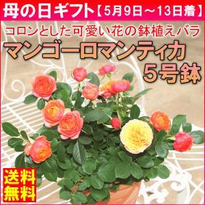 母の日 ギフト バラ 「マンゴーロマンティカ」 5号鉢植え...