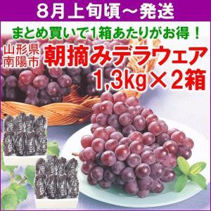 ぶどう デラウェア 送料無料 山形県 デラウェア 1.3kg (7〜10房)×2箱 まとめ買い yamagata-kikou