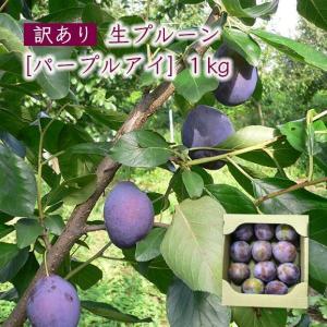【訳あり】生プルーン[パープルアイ]1kg|yamagata-umaies