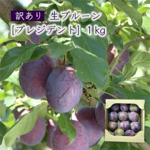 【訳あり】生プルーン[プレジデント]1kg|yamagata-umaies