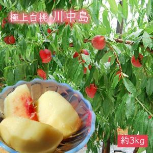極上白桃川中島約3kg(10玉前後)|yamagata-umaies
