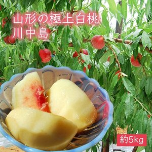 極上白桃川中島約5kg(15〜20玉)|yamagata-umaies