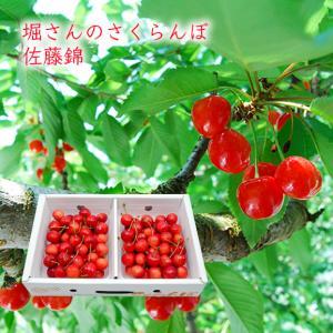 堀さんのさくらんぼ佐藤錦700gパック詰(350g×2パック) yamagata-umaies