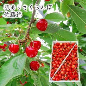 ≪訳あり≫さくらんぼ佐藤錦1kgバラ詰  yamagata-umaies