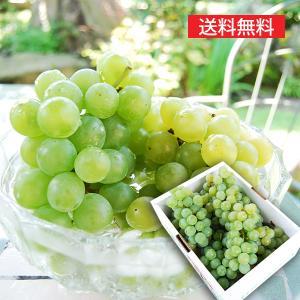 特選ぶどうナイアガラ2kg(6〜7房) yamagata-umaies