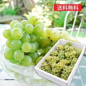 完熟ぶどうナイアガラ4kg(12〜14房) yamagata-umaies