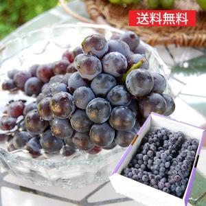 特選ぶどうスチューベン2kg(6〜7房程度) yamagata-umaies