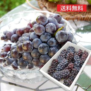 特選ぶどうスチューベン4kg(12〜14房程度) yamagata-umaies