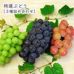 山形の特選ぶどう[3種詰め合わせ] yamagata-umaies