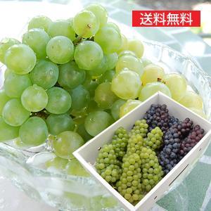 完熟ぶどうナイアガラとスチューベン各2kg yamagata-umaies