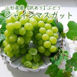 《訳あり》山形県産ぶどう シャインマスカット1.5kg前後(2〜3房) yamagata-umaies