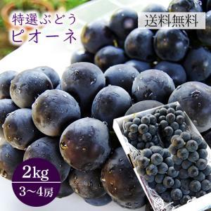 特選ぶどうピオーネ2kg yamagata-umaies
